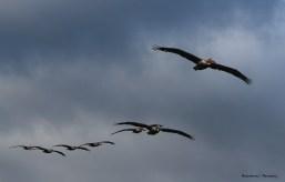 Incoming Squadron;)