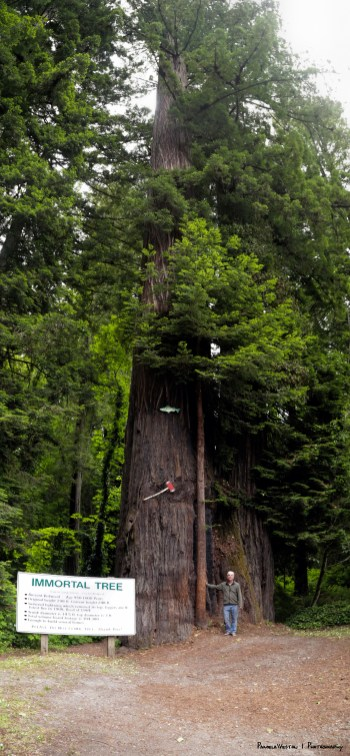 MIke standing next to the Immortal Tree