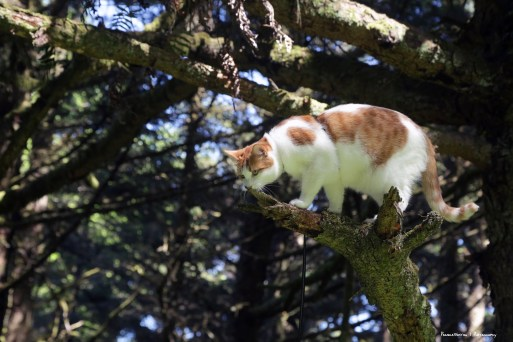 Mr. Sniffy pants has to smell everything in the Sitka Spruce.