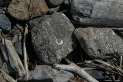 Fossils in the rocks