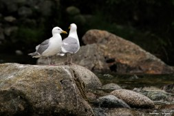 A few gulls discuss the days happenings