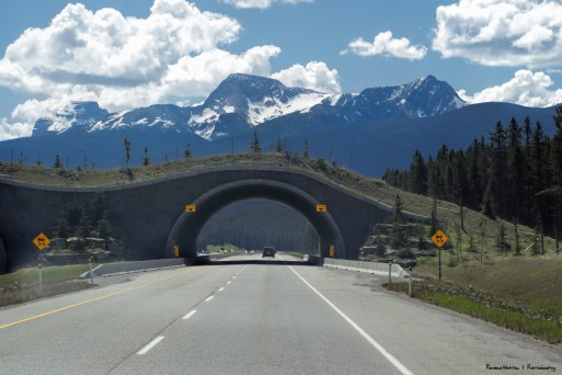 Fabulous Hobbit like wildlife overpasses