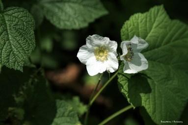 Beautiful white flowers