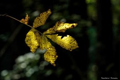 Yellow bursts