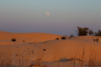 Dunes and Harvest Moon