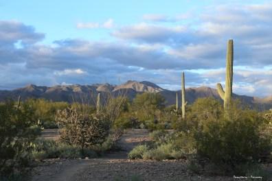 Beautiful desert light