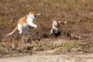 Gonna getcha!