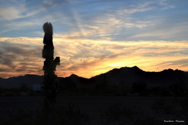Sunset and the old cactus