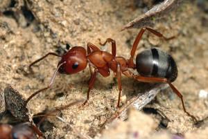 К чему появляются муравьи в доме (Примета). Приметы, к чему появляются муравьи в доме