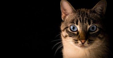 Las mascotas ideales de los signos