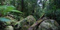 Daintree_National_Park