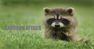 Criptografia SSL/TLS: Novo ataque de guaxinim permiti que invasor quebre a criptografia