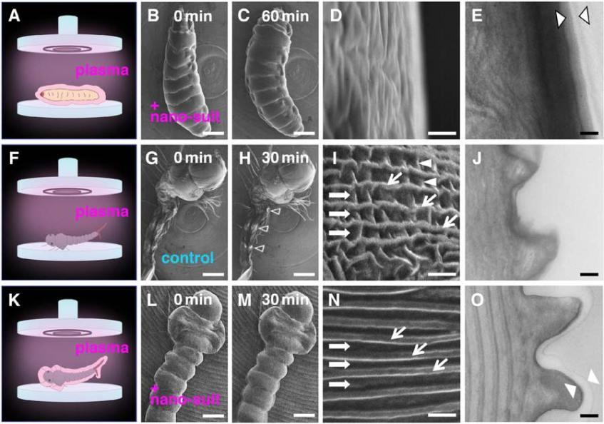 larvae-nano-suits