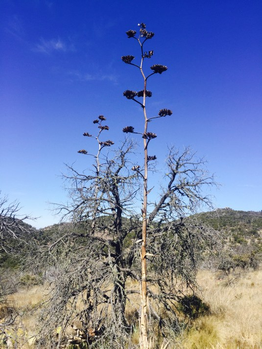 Desert flower-tree thingy