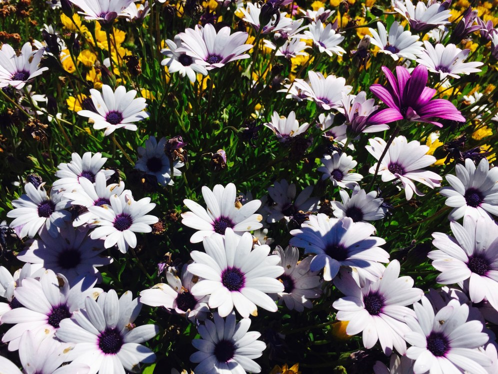 Mum's Beautiful Garden