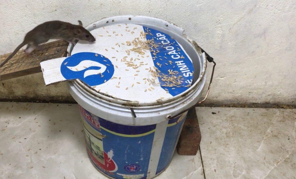 3 Pieges A Rat A Fabriquer Soi Meme