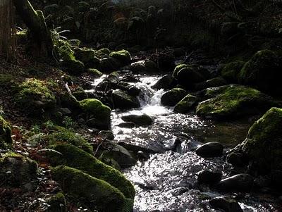 el regatu. Bosque mitologico beyo de pen. amieva , picos de Europa. asturias