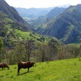 Asturias Rural.Paisaje de Ponga