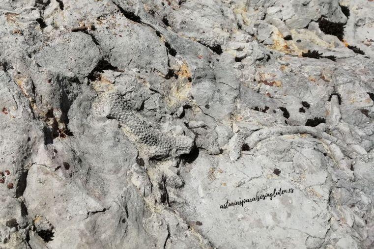 Fosiles_coral_Somiedo