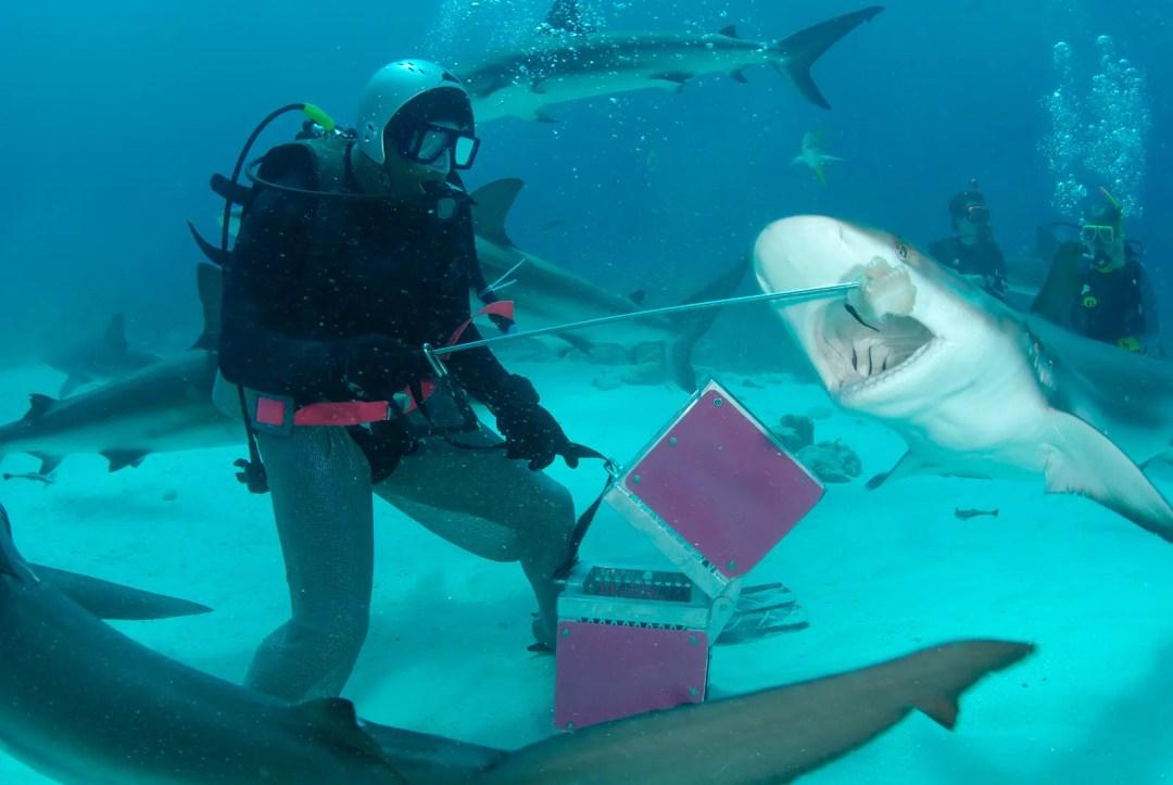 Best Spring 2021 Activities in Cancun