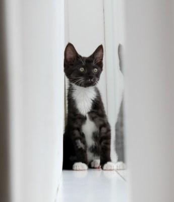 kitten cat turbo kitty kittens spca cats