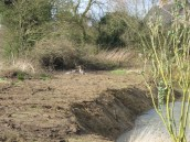 003The pond during clearance work with geese (2) (640x480)