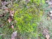 Even more moss