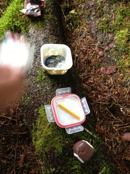 Food Saver container Geocache