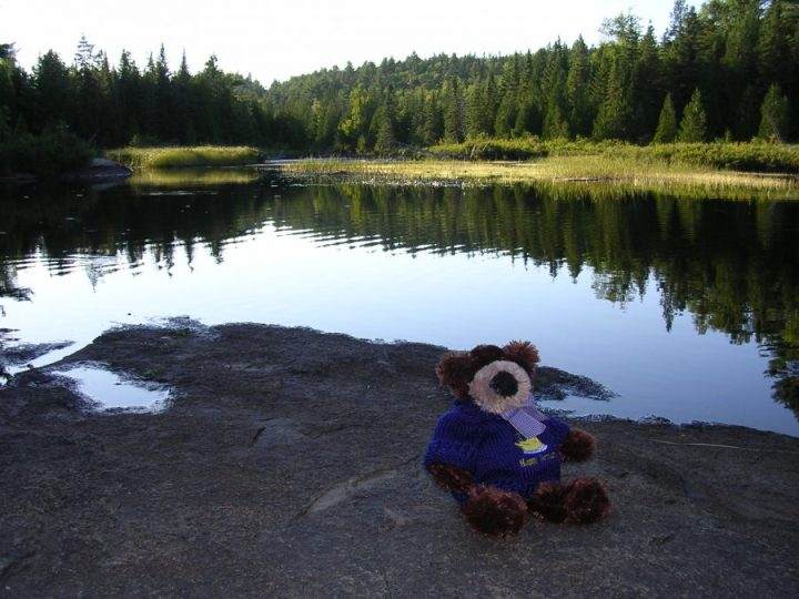 Teddy in Quebec