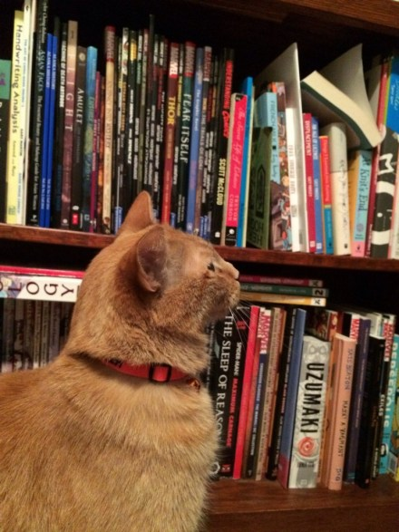 Book Cat *Photo credit: *