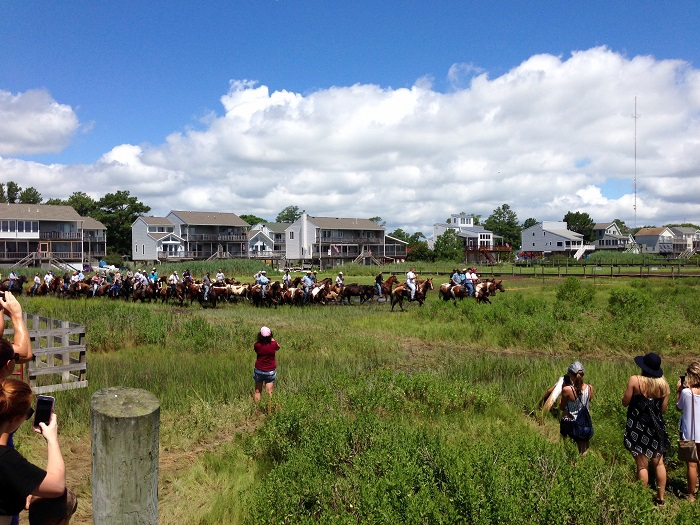 Chincoteague Pony Release