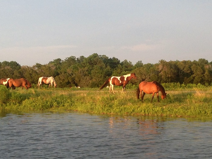 Misty of Chincoteague Pony Penning Itinerary