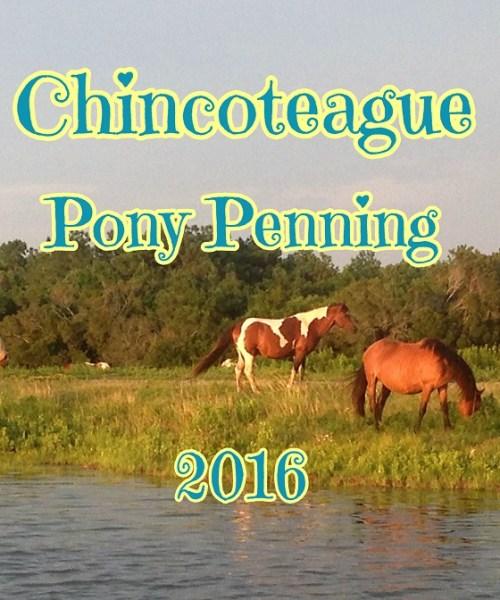 Chincoteague Pony Penning