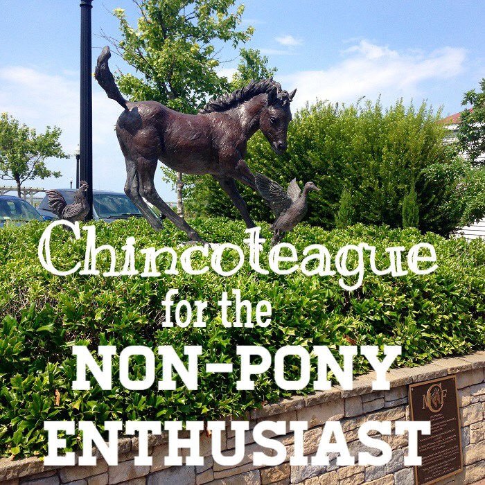 Chincoteague for the Non-Pony Enthusiast