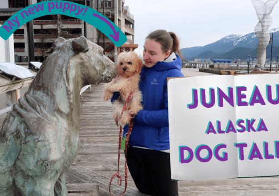 Juneau, Alaska Dog Tales