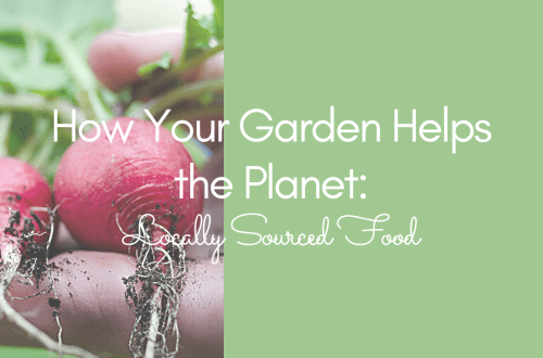 How Your Garden Helps the Planet: Local Foods