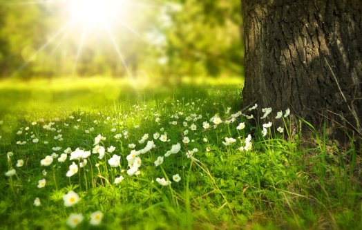 Flowers in meadow showing benefits of actions for the planet