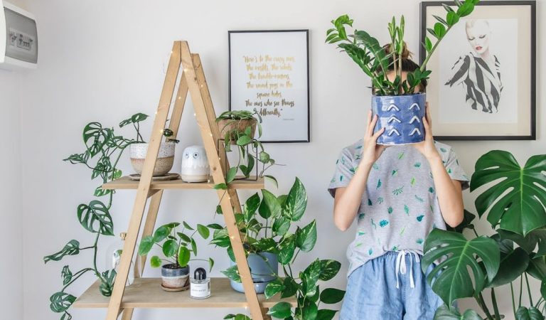 Simple Tips To Keep Your Houseplants Alive And Healthy
