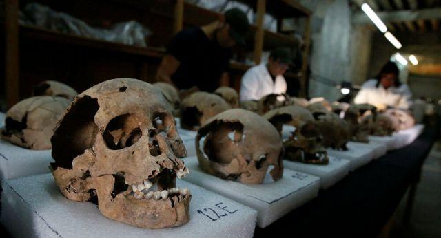 الجماجم في متحف الإنسان