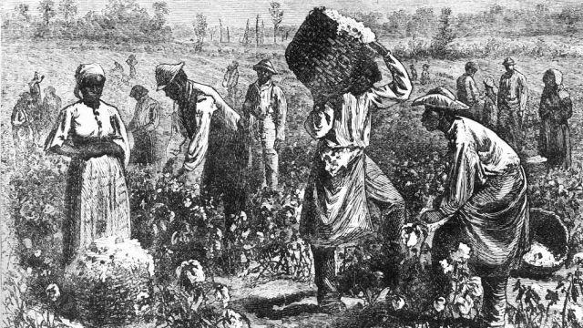 العمل في مزارع قصب السكر