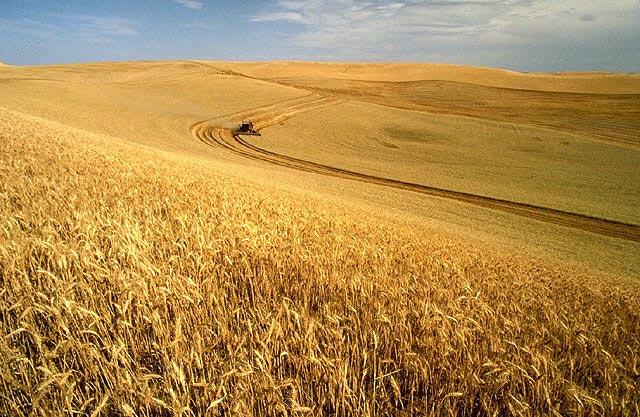 الأراضي الزراعية في أمريكا