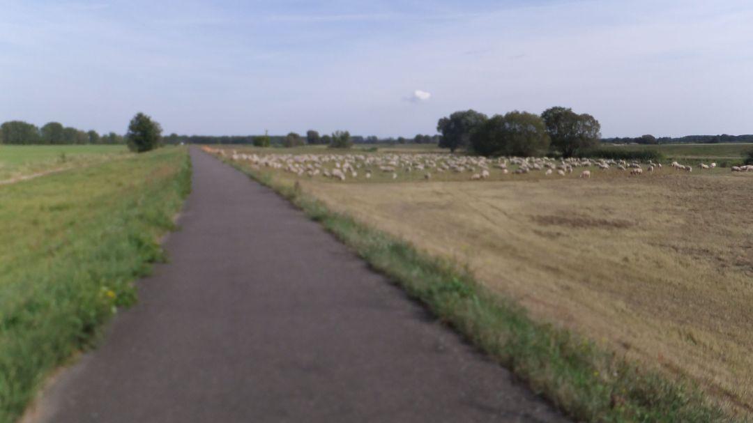 Spree Radweg 2014 - 0 (39)