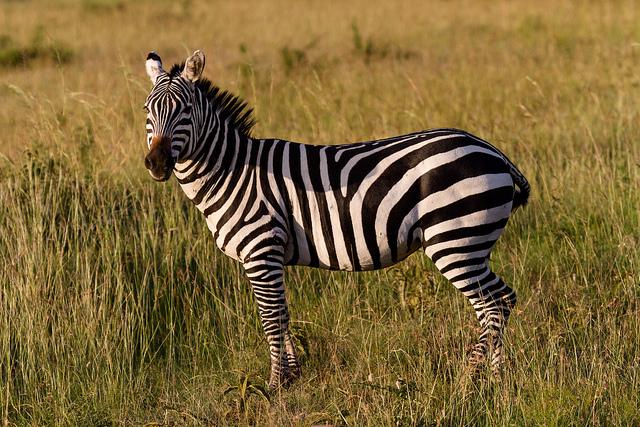 Exploring the Wonders of the Maasai Mara