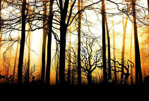 short story skinwalker forest For the Night is Dark
