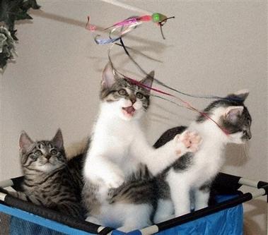 https://i2.wp.com/asymptotia.com/wp-images/2006/12/copy_cat_copies.jpg