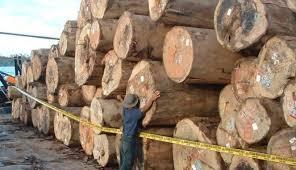 kayu ilegal