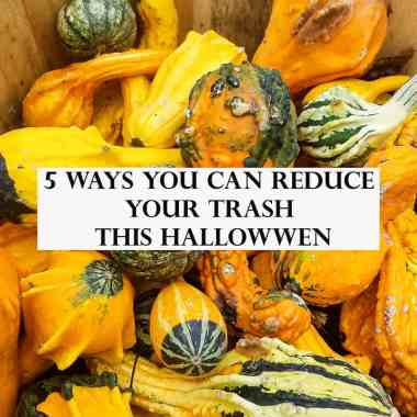 basket of squash and zero-waste tips