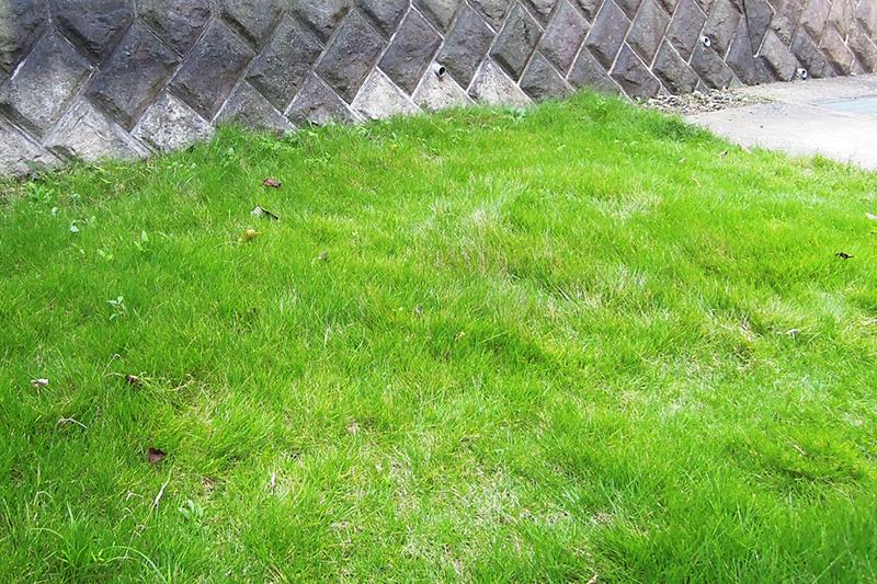 庭石撤去後の芝生広場
