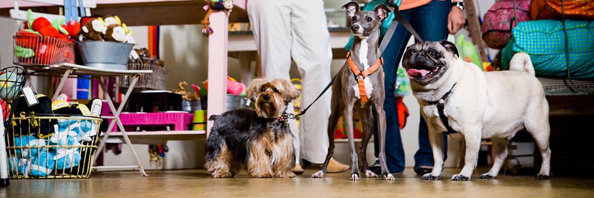 dicas de como montar um pet shop