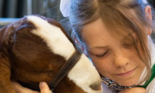Mid-State Fair Junior Livestock Auction Far Surpasses Expectations